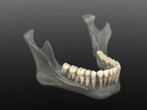 3D rendering of jaw bone