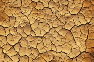 Dry cracks in dirt